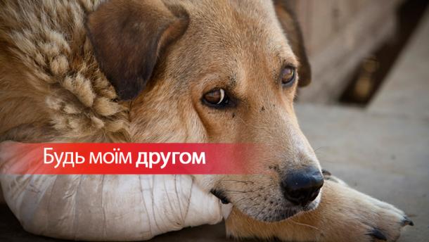 Новини гімназії:4 жовтня відзначається Всесвітній день захисту тварин